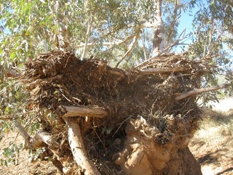 Poppy's Nest