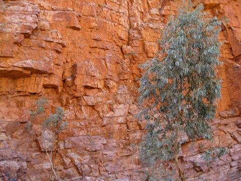 The amazing colours of Ormiston Gorge