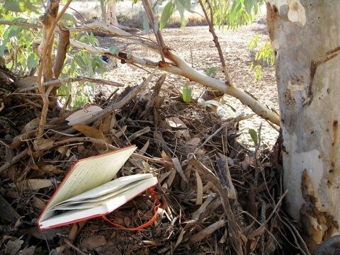 Writing in Poppy's Nest