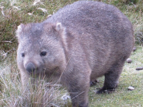 We were told that wombats are either sleeping, eating or scratching.